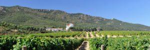 Viñedos de Valmy - Argelès